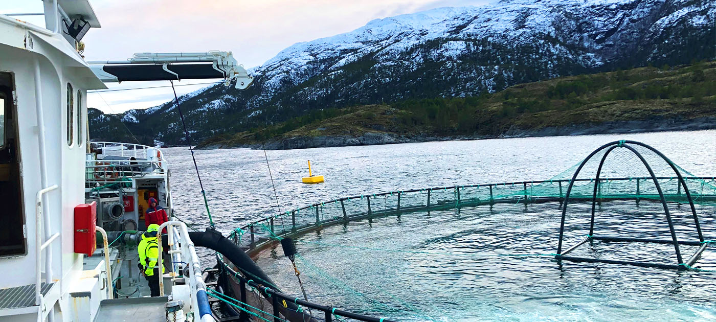 Norcod Cod transitioning to sea phase