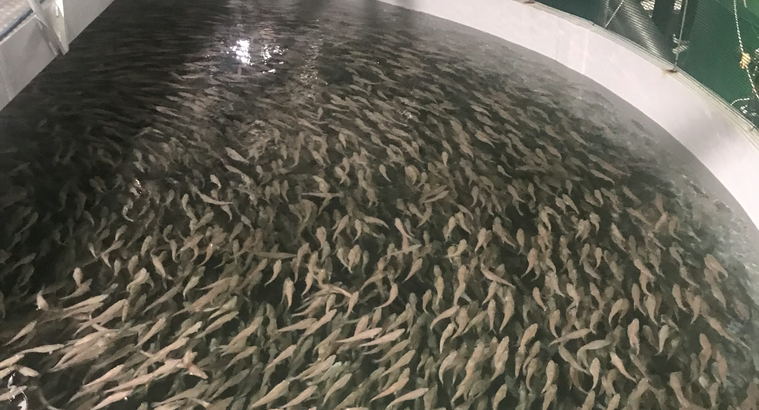 Norcod cod farm in norway